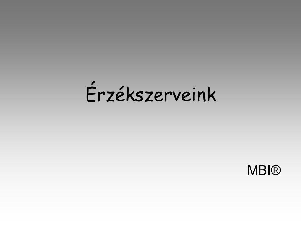 Érzékszerveink MBI®