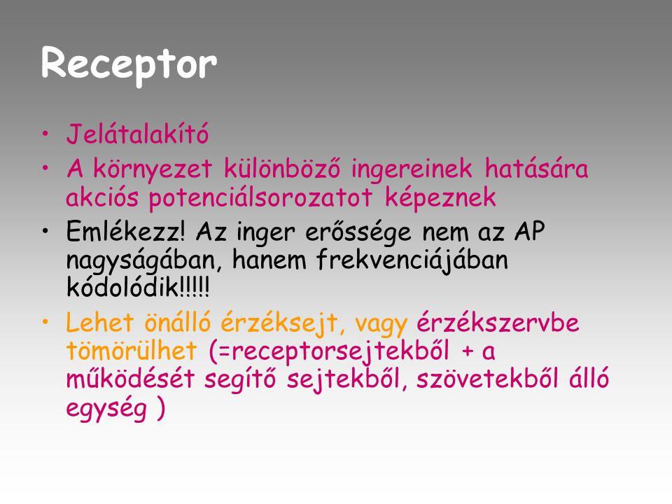 Receptor •J•Jelátalakító •A•A környezet különböző ingereinek hatására akciós potenciálsorozatot képeznek •E•Emlékezz.