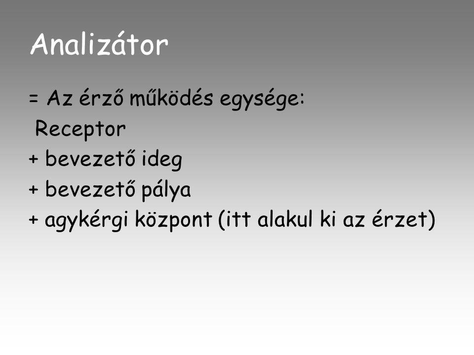 Analizátor = Az érző működés egysége: Receptor + bevezető ideg + bevezető pálya + agykérgi központ (itt alakul ki az érzet)