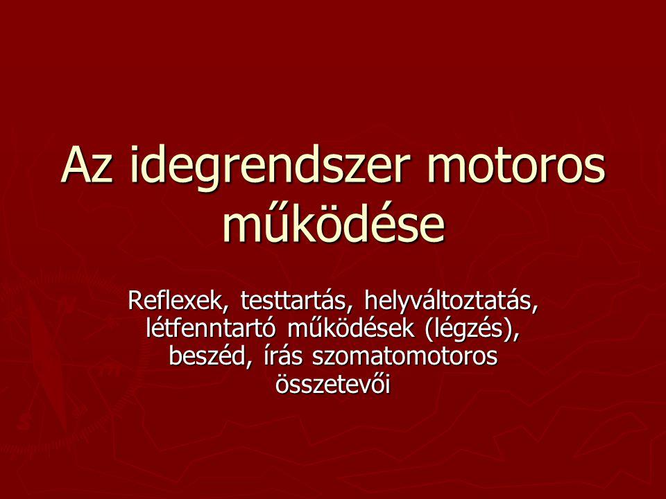 Az idegrendszer motoros működése Reflexek, testtartás, helyváltoztatás, létfenntartó működések (légzés), beszéd, írás szomatomotoros összetevői