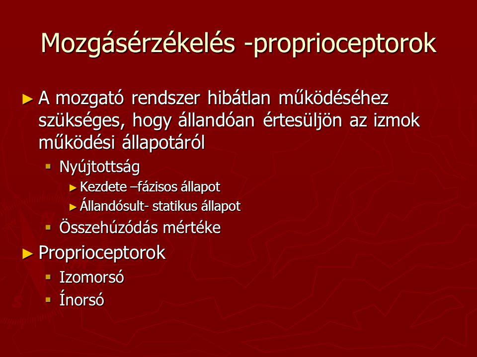 Mozgásérzékelés -proprioceptorok ► A mozgató rendszer hibátlan működéséhez szükséges, hogy állandóan értesüljön az izmok működési állapotáról  Nyújto