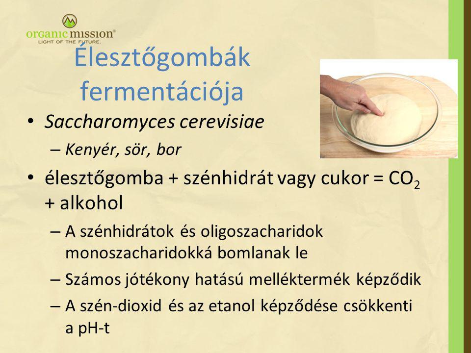 Élesztőgombák fermentációja • Saccharomyces cerevisiae – Kenyér, sör, bor • élesztőgomba + szénhidrát vagy cukor = CO 2 + alkohol – A szénhidrátok és