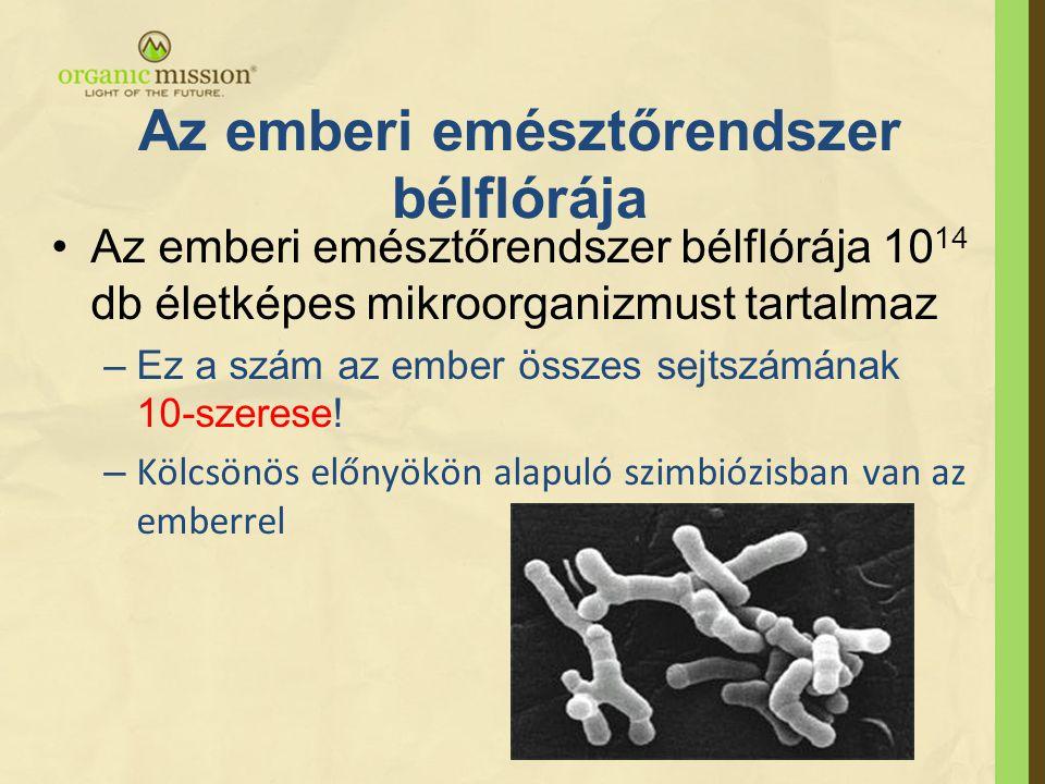Az emberi emésztőrendszer bélflórája •Az emberi emésztőrendszer bélflórája 10 14 db életképes mikroorganizmust tartalmaz –Ez a szám az ember összes se