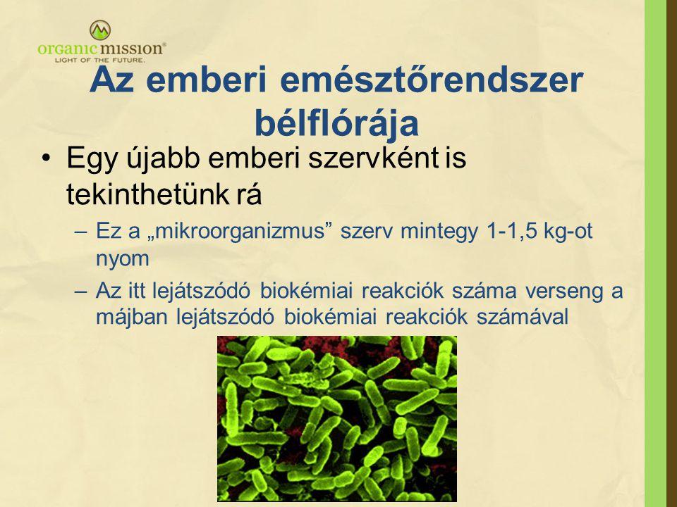"""•Egy újabb emberi szervként is tekinthetünk rá –Ez a """"mikroorganizmus"""" szerv mintegy 1-1,5 kg-ot nyom –Az itt lejátszódó biokémiai reakciók száma vers"""
