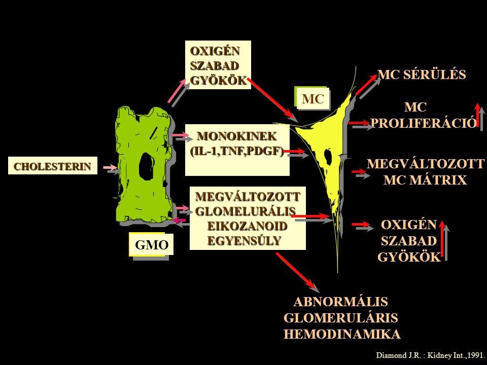 OXIGÉNSZABADGYÖKÖK MONOKINEK (IL-1,TNF,PDGF) MEGVÁLTOZOTT GLOMELURÁLIS EIKOZANOID EGYENSÚLY CHOLESTERIN MC SÉRÜLÉS MEGVÁLTOZOTT MC MÁTRIX MC PROLIFERÁ