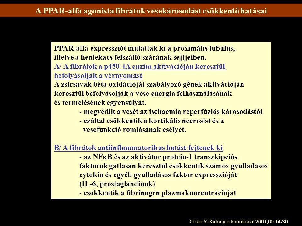 A PPAR-alfa agonista fibrátok vesekárosodást csökkentő hatásai PPAR-alfa expressziót mutattak ki a proximális tubulus, illetve a henlekacs felszálló s
