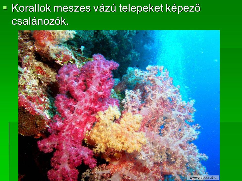  Korallok meszes vázú telepeket képező csalánozók.