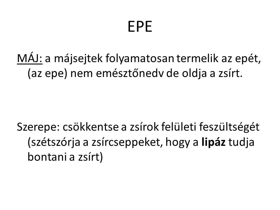 EPE MÁJ: a májsejtek folyamatosan termelik az epét, (az epe) nem emésztőnedv de oldja a zsírt. Szerepe: csökkentse a zsírok felületi feszültségét (szé