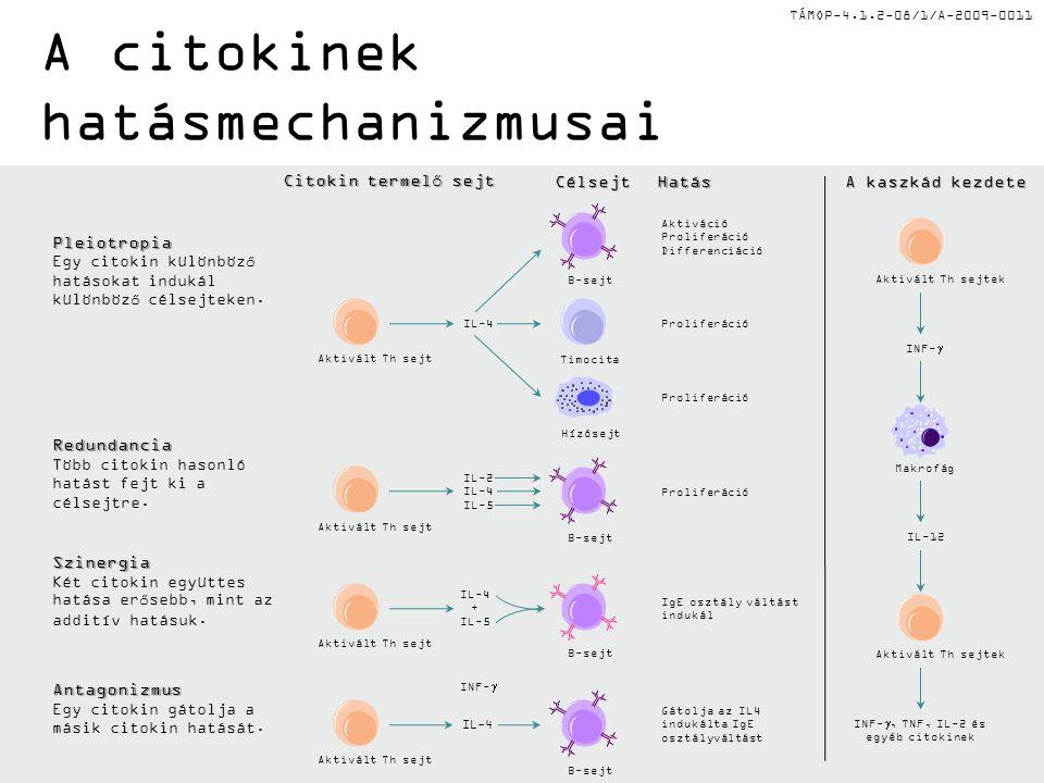 TÁMOP-4.1.2-08/1/A-2009-0011 A citokinek hatásmechanizmusaiRedundancia Több citokin hasonló hatást fejt ki a célsejtre.
