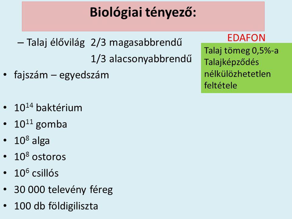 – Talaj élővilág 2/3 magasabbrendű 1/3 alacsonyabbrendű • fajszám – egyedszám • 10 14 baktérium • 10 11 gomba • 10 8 alga • 10 8 ostoros • 10 6 csilló