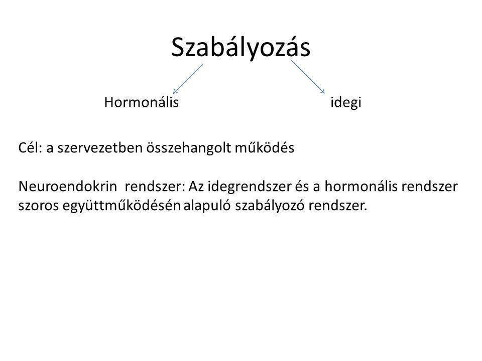 Hipofízis hormonjai elülső lebeny: 6 féle hormont termel, ezek két csoportba oszthatók • STH (növekedési hormon)- közvetlen hatás • más belső elválasztású mirigyre ható hormonok: – TSH (tireoidea stimuláló hormon- pajzsmirigy serkentő hormon) » pajzsmirigyre hat, a pajzsmirigyhormonok hiánya serkentőleg hat rá – ACTH » mellékvesekéregre hat (ez három rétegű) • aldoszteron-csoport: só-víz háztartásért felel • szénhidrát anyagcserét befolyásolók: kortizon, kortikoszteron • izomhormonok:tesztoszteron