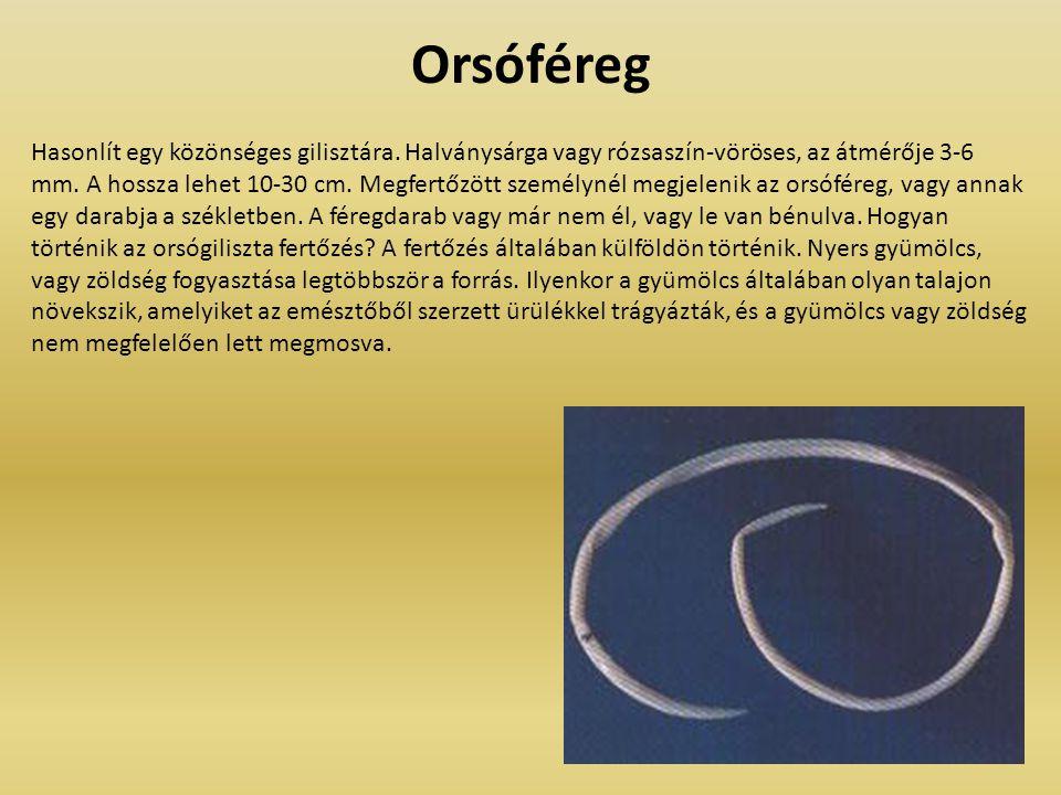 Orsóféreg Hasonlít egy közönséges gilisztára. Halványsárga vagy rózsaszín-vöröses, az átmérője 3-6 mm. A hossza lehet 10-30 cm. Megfertőzött személyné