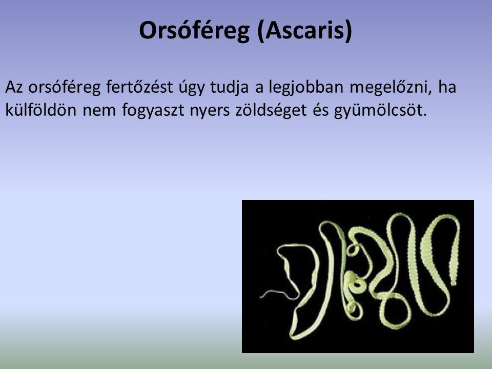Orsóféreg (Ascaris) Az orsóféreg fertőzést úgy tudja a legjobban megelőzni, ha külföldön nem fogyaszt nyers zöldséget és gyümölcsöt.