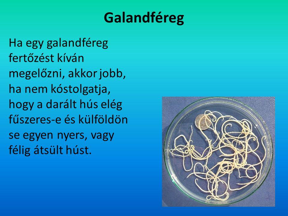 Galandféreg Ha egy galandféreg fertőzést kíván megelőzni, akkor jobb, ha nem kóstolgatja, hogy a darált hús elég fűszeres-e és külföldön se egyen nyer