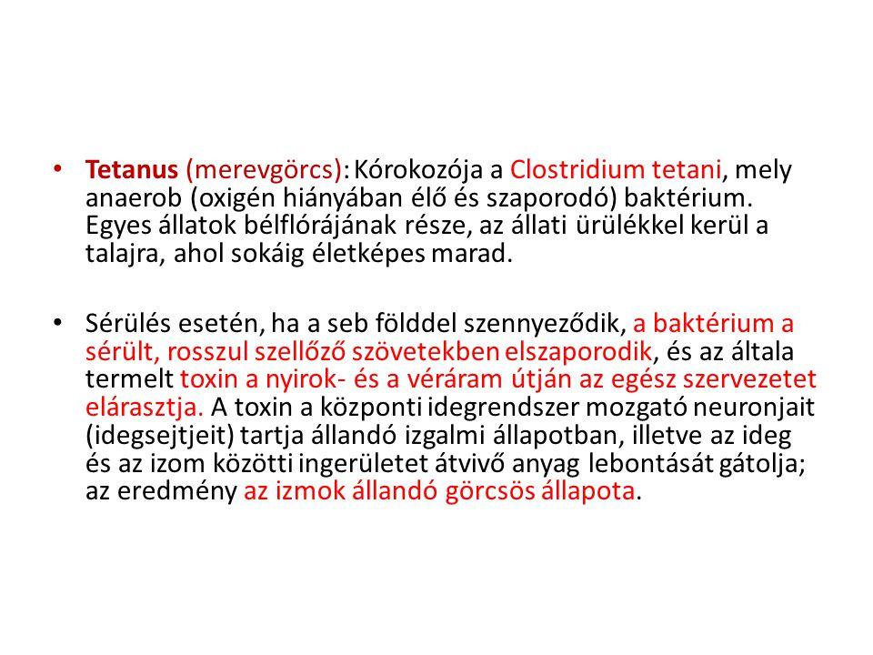 • Tetanus (merevgörcs): Kórokozója a Clostridium tetani, mely anaerob (oxigén hiányában élő és szaporodó) baktérium. Egyes állatok bélflórájának része
