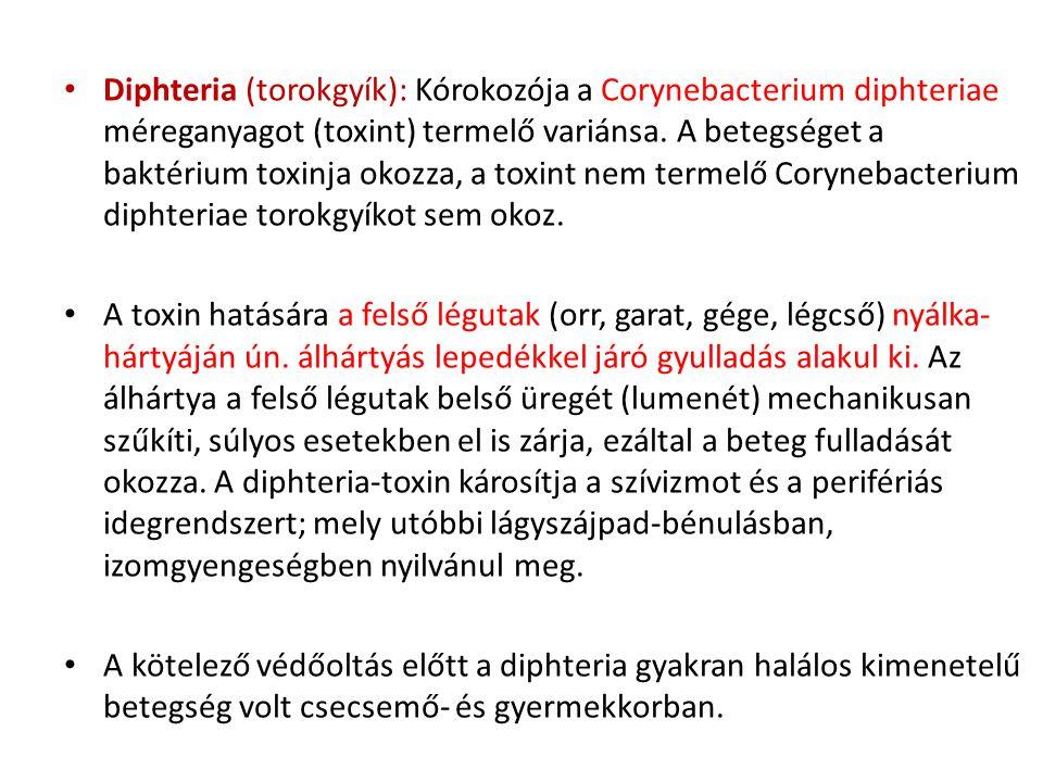 • Diphteria (torokgyík): Kórokozója a Corynebacterium diphteriae méreganyagot (toxint) termelő variánsa. A betegséget a baktérium toxinja okozza, a to