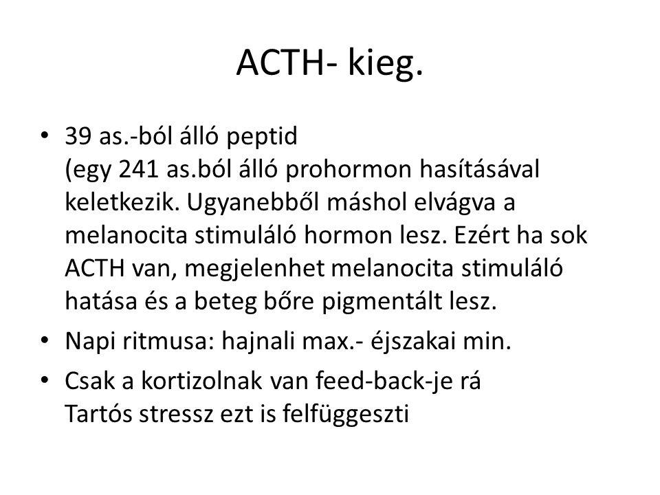 ACTH- kieg. • 39 as.-ból álló peptid (egy 241 as.ból álló prohormon hasításával keletkezik. Ugyanebből máshol elvágva a melanocita stimuláló hormon le