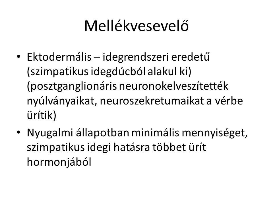Mellékvesevelő • Ektodermális – idegrendszeri eredetű (szimpatikus idegdúcból alakul ki) (posztganglionáris neuronokelveszítették nyúlványaikat, neuro