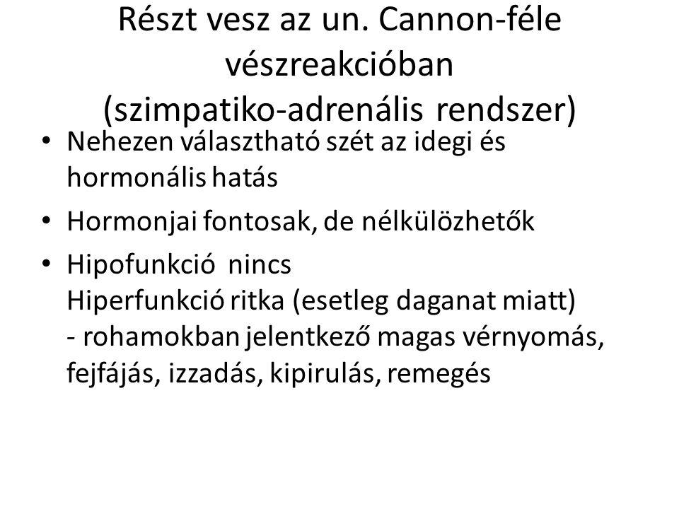 Részt vesz az un. Cannon-féle vészreakcióban (szimpatiko-adrenális rendszer) • Nehezen választható szét az idegi és hormonális hatás • Hormonjai fonto