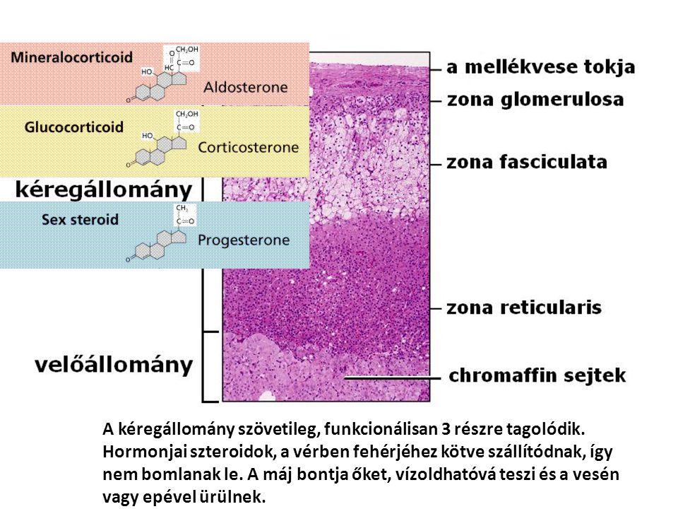 A kéregállomány szövetileg, funkcionálisan 3 részre tagolódik. Hormonjai szteroidok, a vérben fehérjéhez kötve szállítódnak, így nem bomlanak le. A má