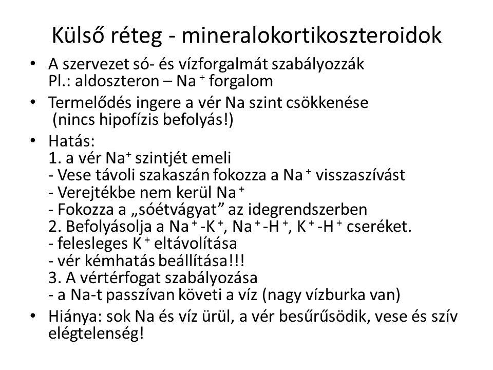 Külső réteg - mineralokortikoszteroidok • A szervezet só- és vízforgalmát szabályozzák Pl.: aldoszteron – Na + forgalom • Termelődés ingere a vér Na s