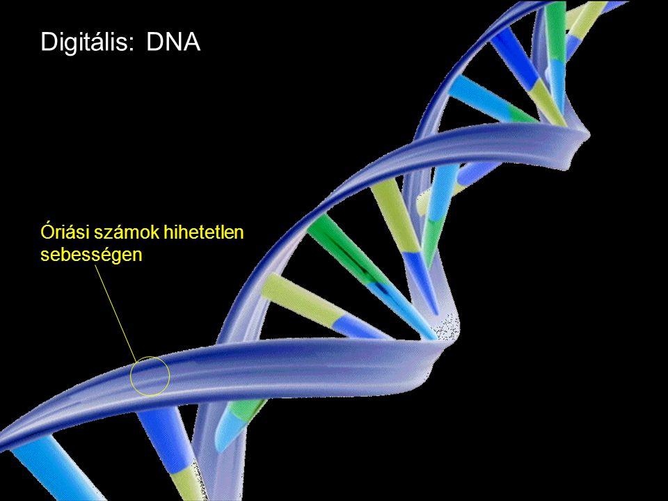 Google Confidential and Proprietary Digitális: DNA Óriási számok hihetetlen sebességen