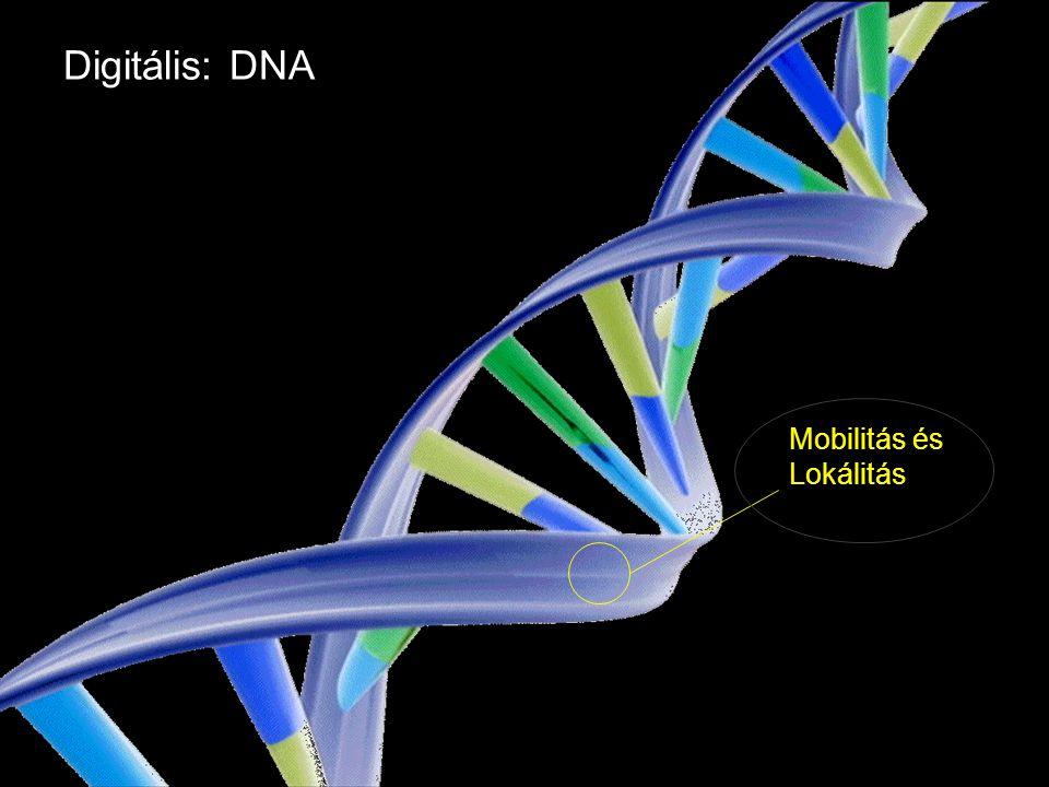 Google Confidential and Proprietary Digitális: DNA Mobilitás és Lokálitás