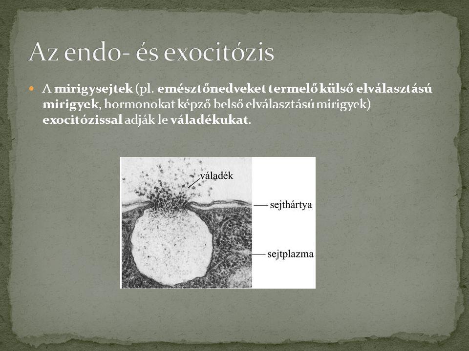  A mirigysejtek (pl.
