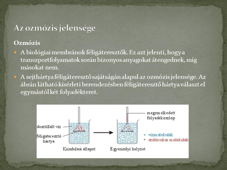 Ozmózis  A biológiai membránok féligáteresztők.
