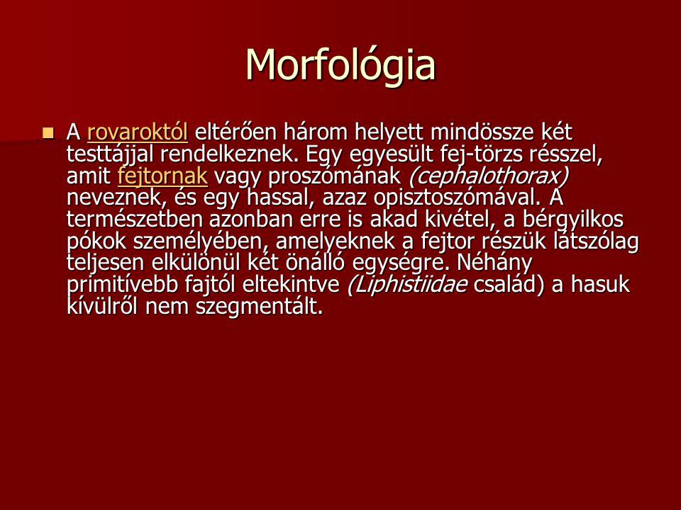Morfológia  A rovaroktól eltérően három helyett mindössze két testtájjal rendelkeznek.