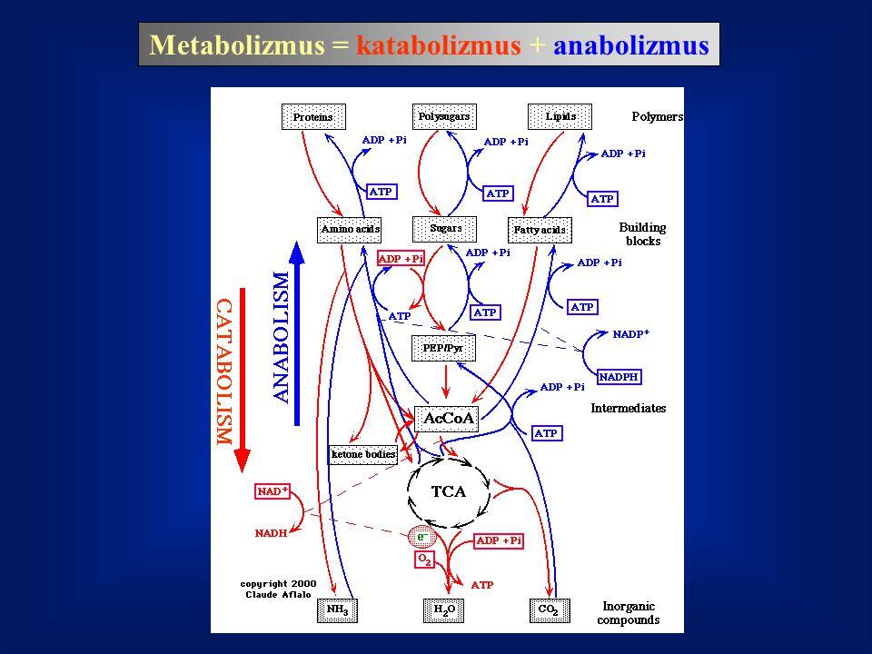 Metabolizmus = katabolizmus + anabolizmus