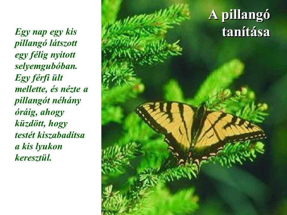 A pillangó tanítása Egy nap egy kis pillangó látszott egy félig nyitott selyemgubóban. Egy férfi ült mellette, és nézte a pillangót néhány óráig, ahog