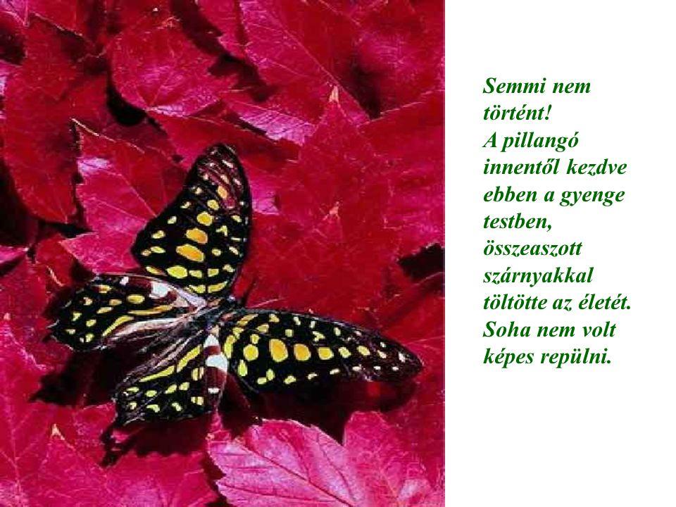 Semmi nem történt! A pillangó innentől kezdve ebben a gyenge testben, összeaszott szárnyakkal töltötte az életét. Soha nem volt képes repülni.