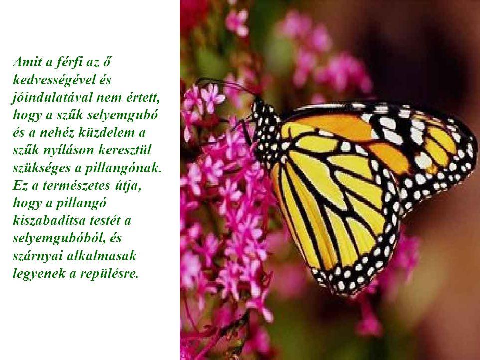 Amit a férfi az ő kedvességével és jóindulatával nem értett, hogy a szűk selyemgubó és a nehéz küzdelem a szűk nyíláson keresztül szükséges a pillangó