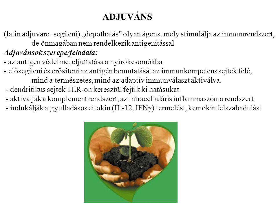 """(latin adjuvare=segíteni) """"depothatás olyan ágens, mely stimulálja az immunrendszert, de önmagában nem rendelkezik antigenitással Adjuvánsok szerepe/feladata: - az antigén védelme, eljuttatása a nyirokcsomókba - elősegíteni és erősíteni az antigén bemutatását az immunkompetens sejtek felé, mind a természetes, mind az adaptív immunválaszt aktiválva."""