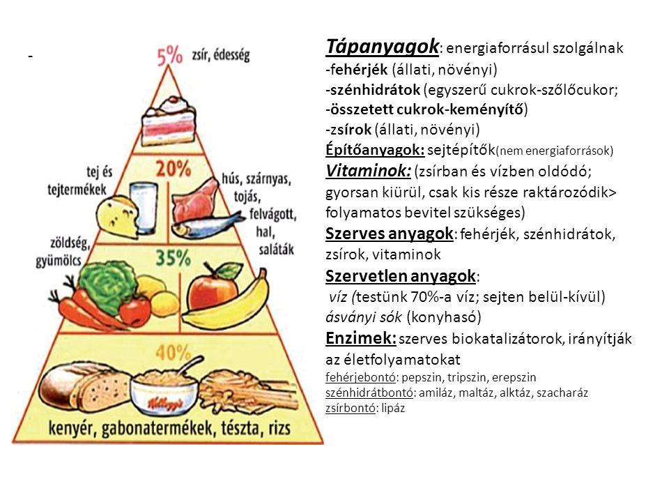 - Tápanyagok : energiaforrásul szolgálnak -fehérjék (állati, növényi) -szénhidrátok (egyszerű cukrok-szőlőcukor; -összetett cukrok-keményítő) -zsírok