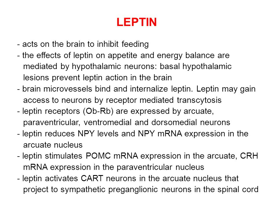 LEPTIN - acts on the brain to inhibit feeding - the effects of leptin on appetite and energy balance are mediated by hypothalamic neurons: basal hypot