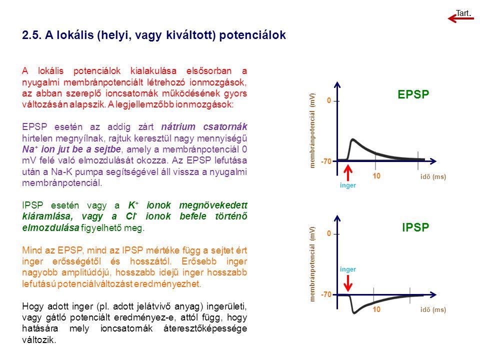 2.5. A lokális (helyi, vagy kiváltott) potenciálok A lokális potenciálok kialakulása elsősorban a nyugalmi membránpotenciált létrehozó ionmozgások, az