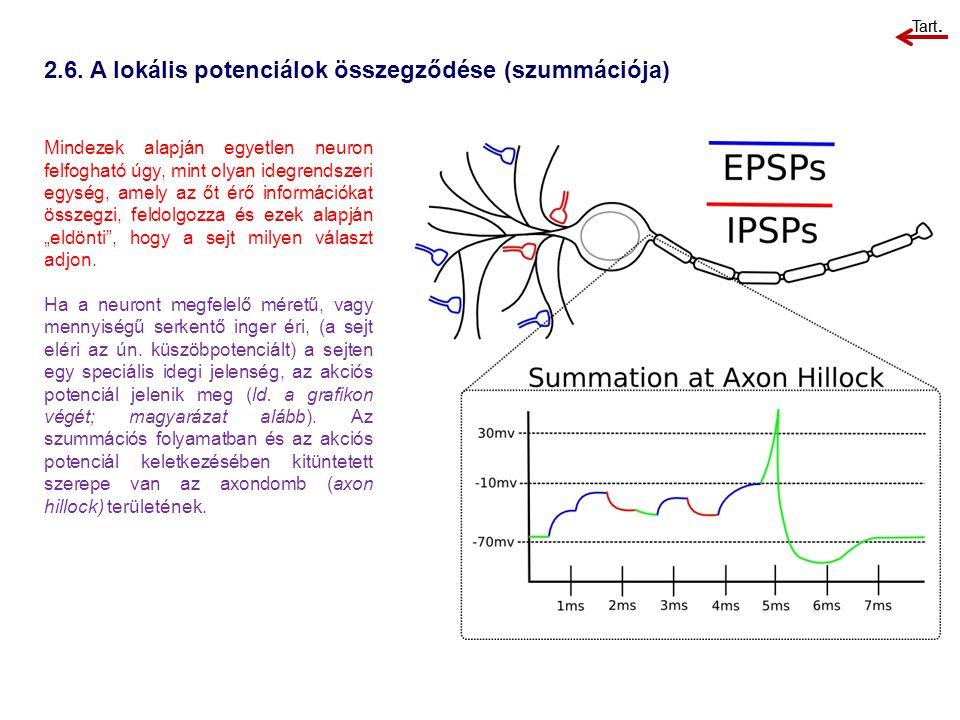 2.6. A lokális potenciálok összegződése (szummációja) Mindezek alapján egyetlen neuron felfogható úgy, mint olyan idegrendszeri egység, amely az őt ér