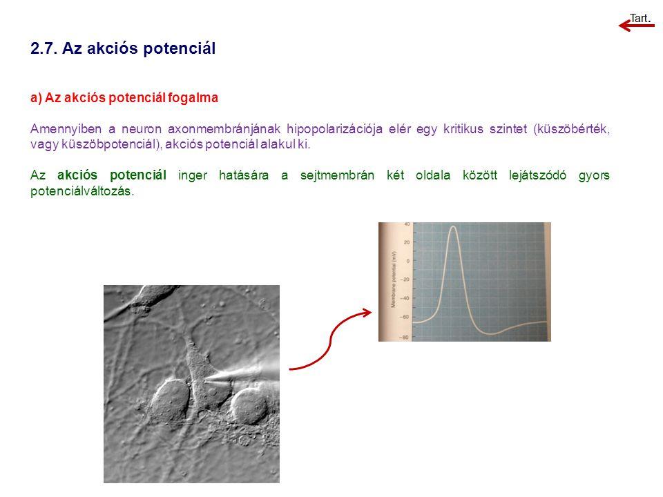 2.7. Az akciós potenciál a) Az akciós potenciál fogalma Amennyiben a neuron axonmembránjának hipopolarizációja elér egy kritikus szintet (küszöbérték,