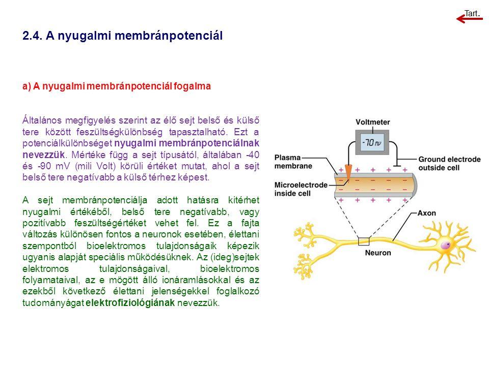 2.4. A nyugalmi membránpotenciál a) A nyugalmi membránpotenciál fogalma Általános megfigyelés szerint az élő sejt belső és külső tere között feszültsé