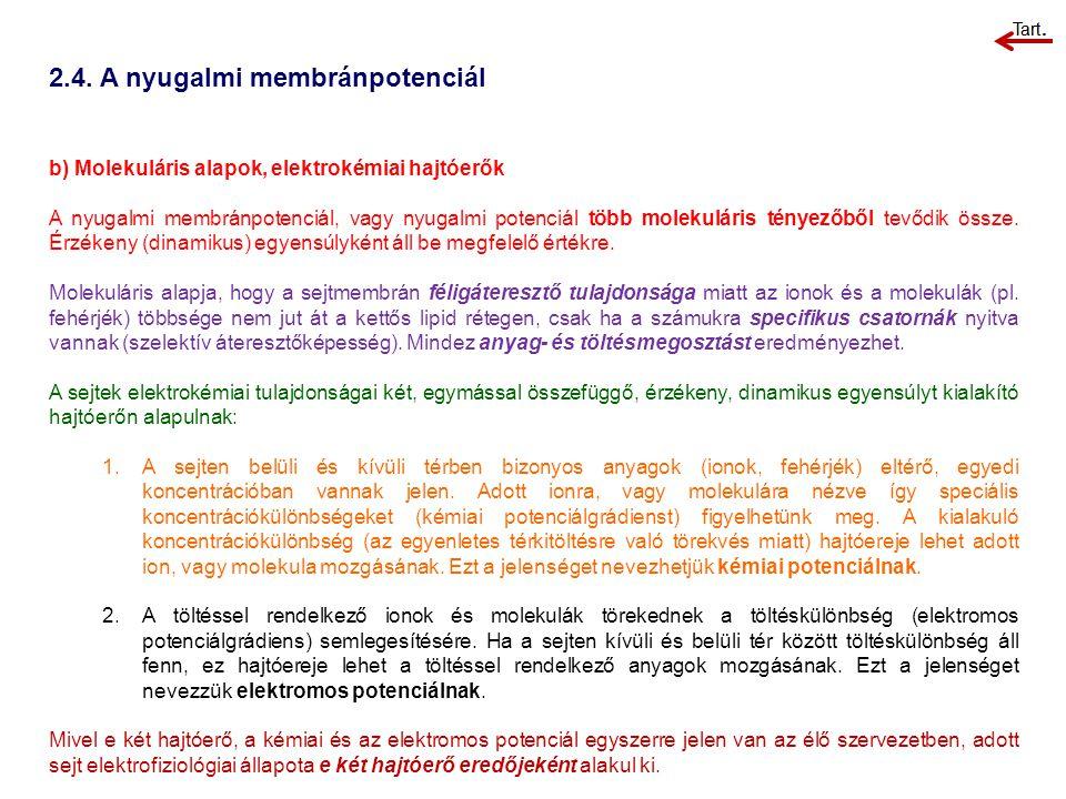 2.4. A nyugalmi membránpotenciál b) Molekuláris alapok, elektrokémiai hajtóerők A nyugalmi membránpotenciál, vagy nyugalmi potenciál több molekuláris
