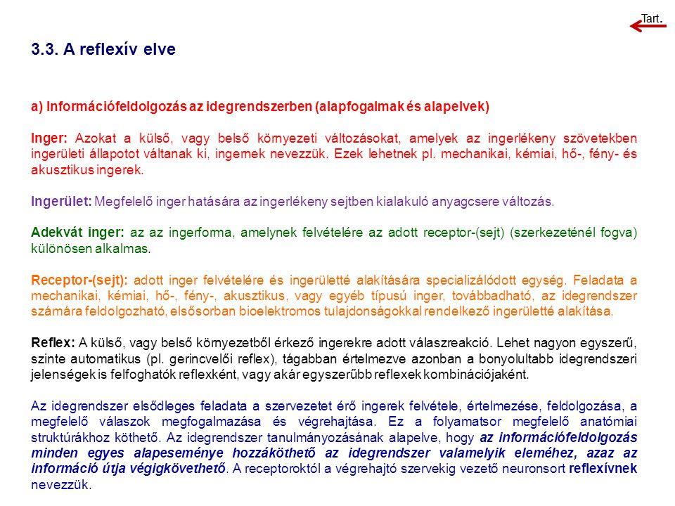 3.3. A reflexív elve a) Információfeldolgozás az idegrendszerben (alapfogalmak és alapelvek) Inger: Azokat a külső, vagy belső környezeti változásokat