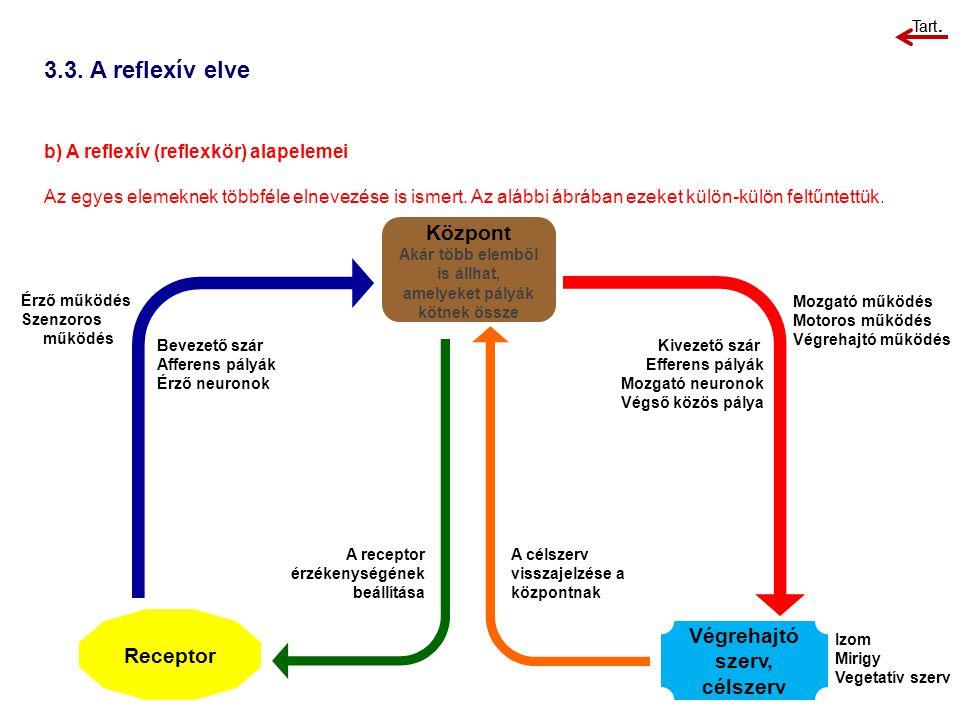 3.3. A reflexív elve b) A reflexív (reflexkör) alapelemei Az egyes elemeknek többféle elnevezése is ismert. Az alábbi ábrában ezeket külön-külön feltű