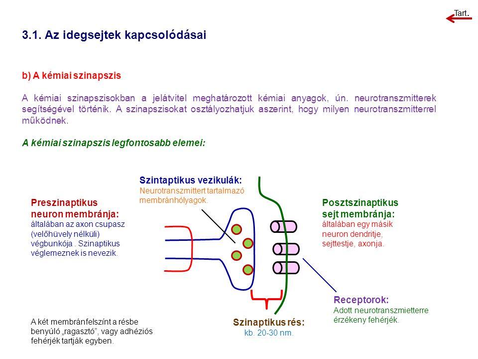 3.1. Az idegsejtek kapcsolódásai b) A kémiai szinapszis A kémiai szinapszisokban a jelátvitel meghatározott kémiai anyagok, ún. neurotranszmitterek se