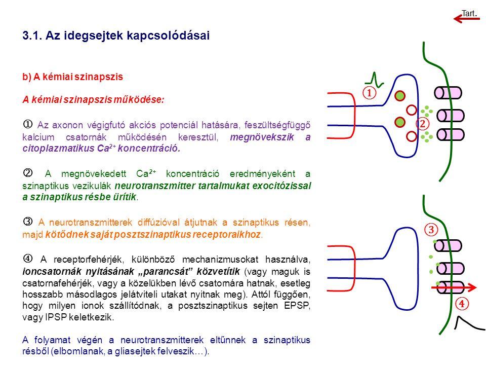 3.1. Az idegsejtek kapcsolódásai b) A kémiai szinapszis A kémiai szinapszis működése:  Az axonon végigfutó akciós potenciál hatására, feszültségfüggő