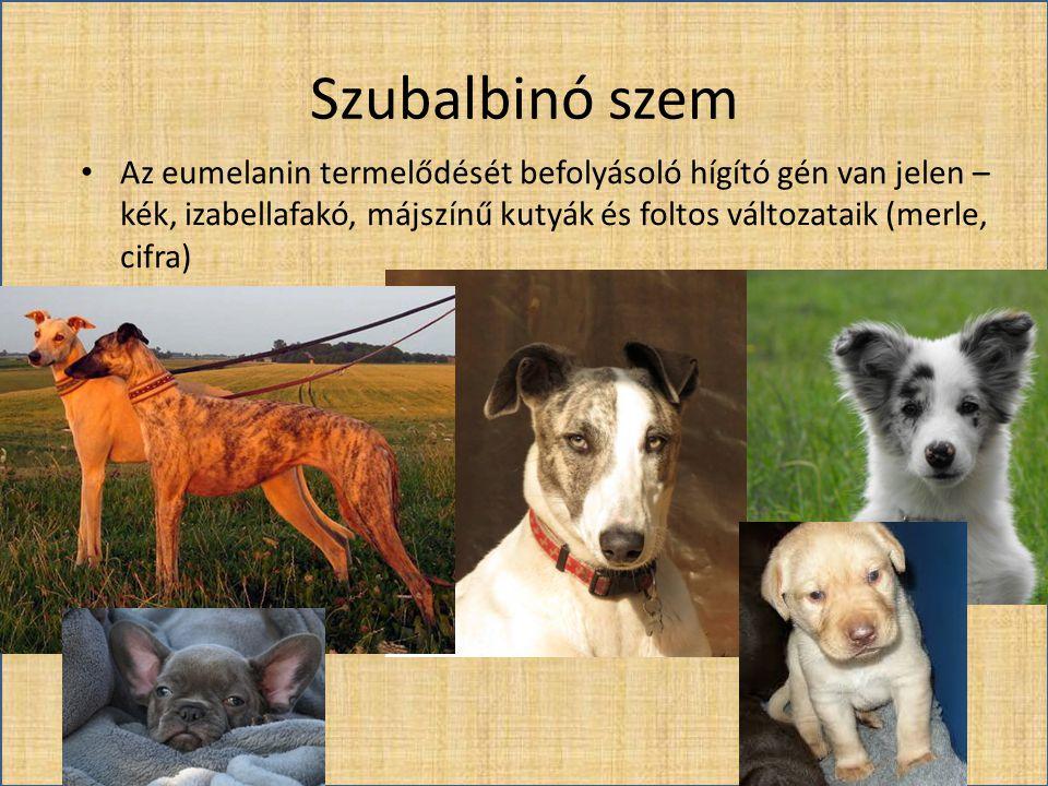 Szubalbinó szem • Az eumelanin termelődését befolyásoló hígító gén van jelen – kék, izabellafakó, májszínű kutyák és foltos változataik (merle, cifra)