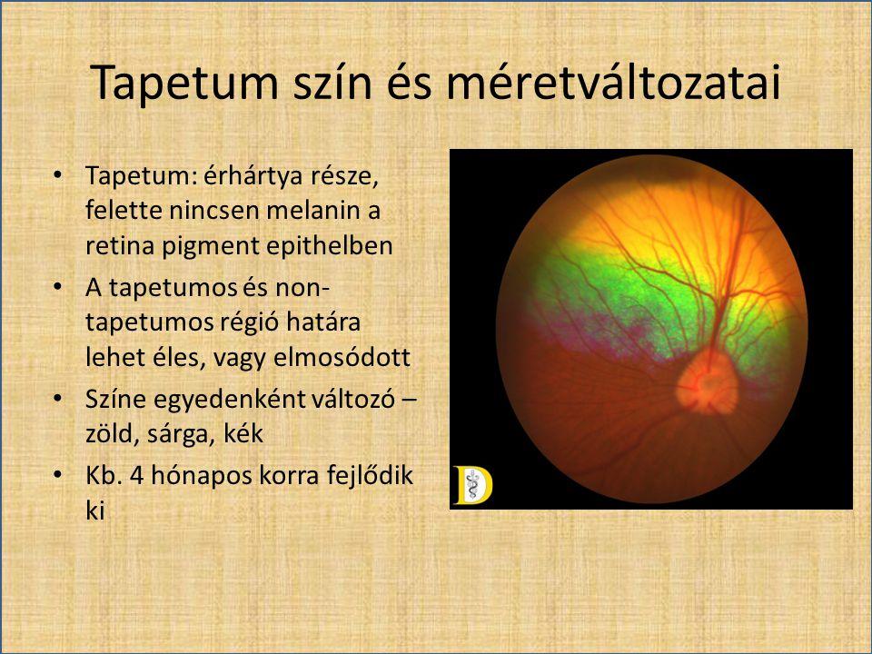 Tapetum szín és méretváltozatai • Tapetum: érhártya része, felette nincsen melanin a retina pigment epithelben • A tapetumos és non- tapetumos régió h