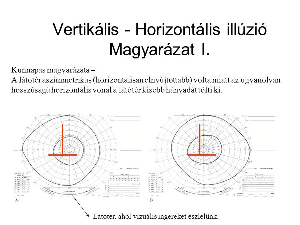 Kunnapas magyarázata – A látótér aszimmetrikus (horizontálisan elnyújtottabb) volta miatt az ugyanolyan hosszúságú horizontális vonal a látótér kisebb