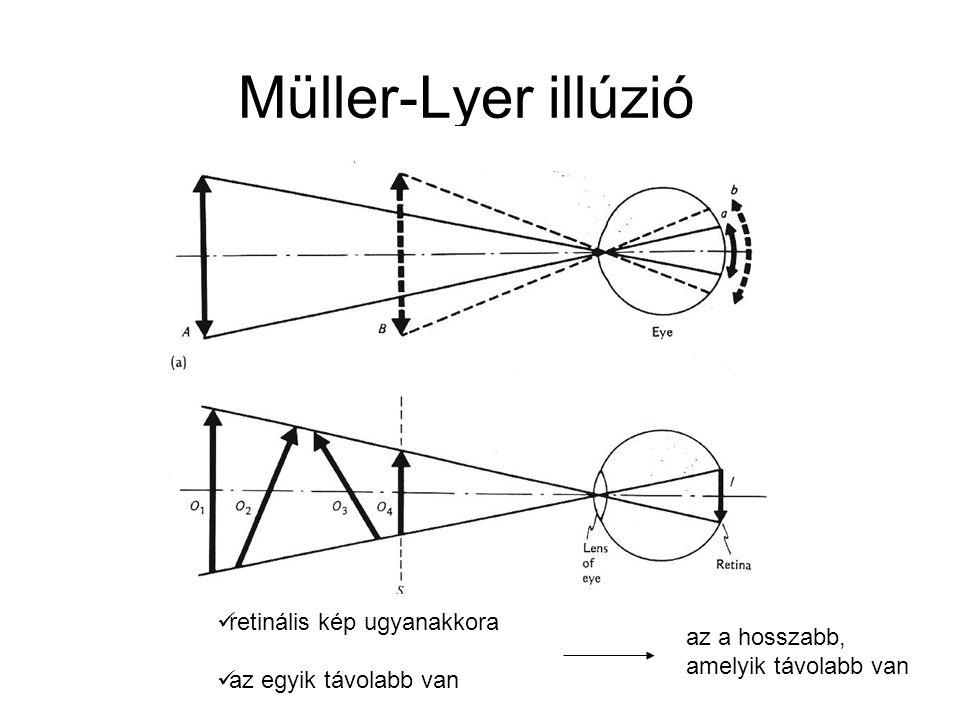  retinális kép ugyanakkora  az egyik távolabb van az a hosszabb, amelyik távolabb van